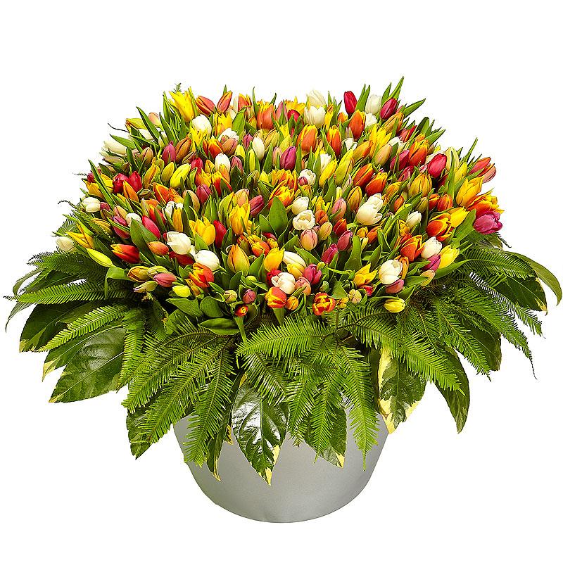 Доставка цветов по одессе тюльпаны москва, оптом