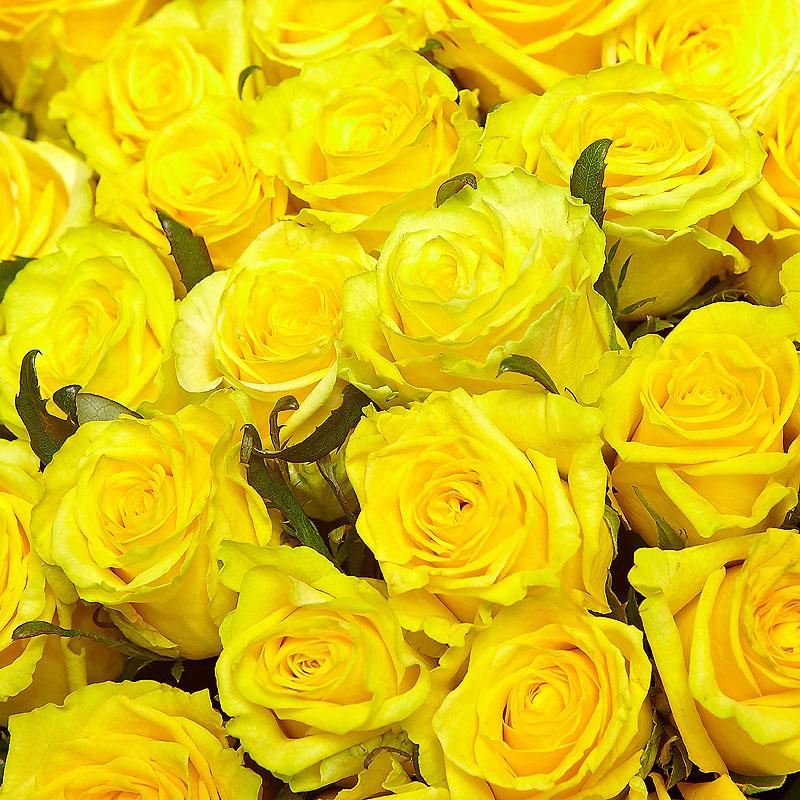 желтые розы фотографии жаргонизмы, нецензурщину панибратство