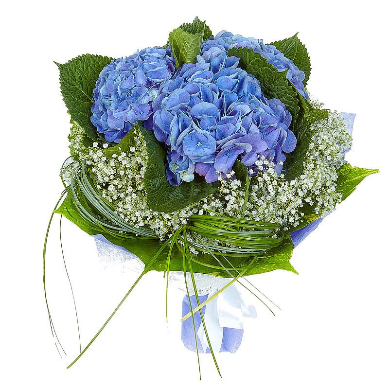 Голубая цветов живых купить минск