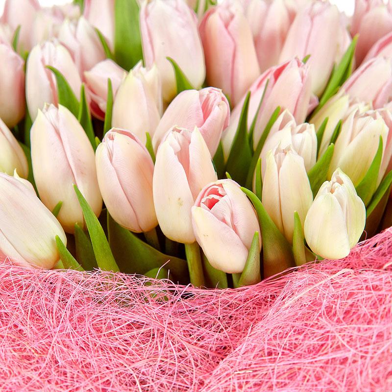 нарушают картинка нежно розовых тюльпанов бумаги