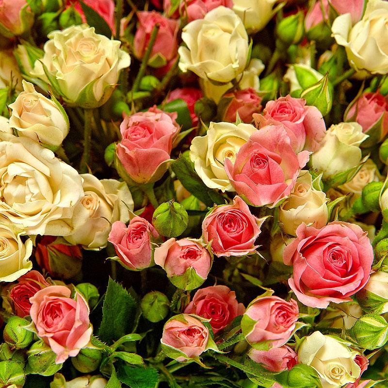 программы, розы мелкие кустовые фото фото солдат